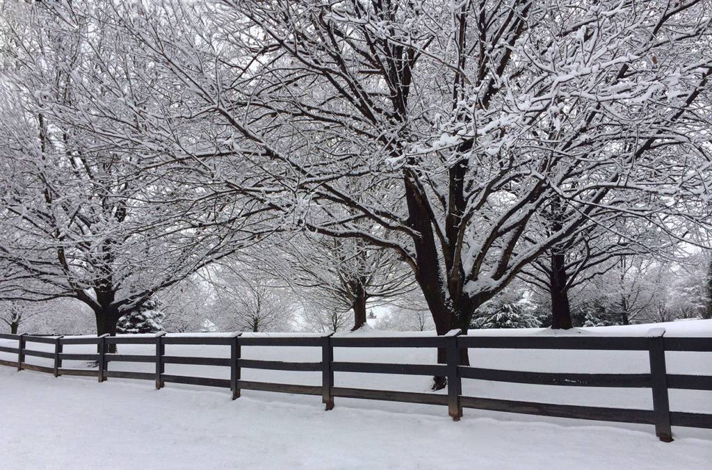 winter and snow trees - photo #35