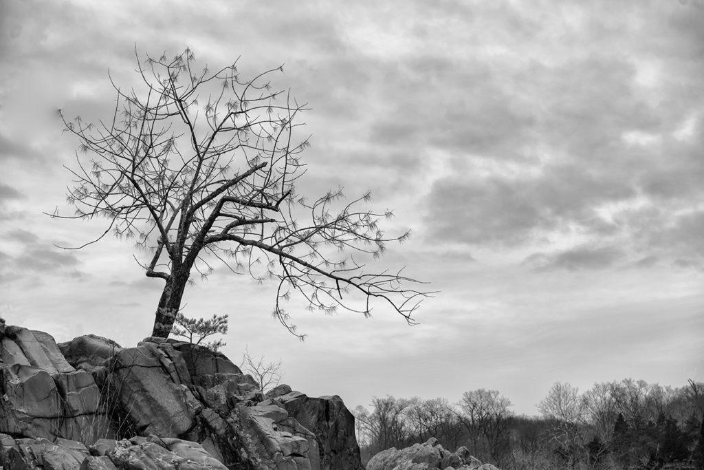 D800-Great Falls VA-0781-2014-02-08