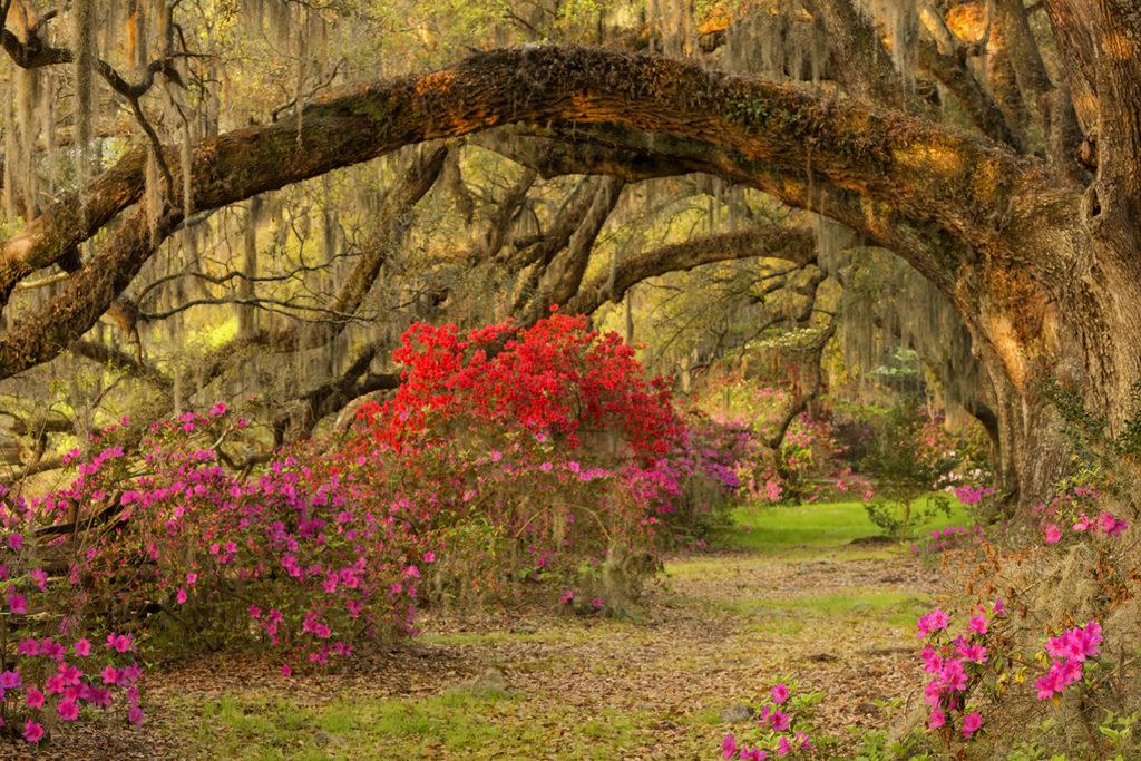 D800-Charleston Day 8-2201-2014-04-05