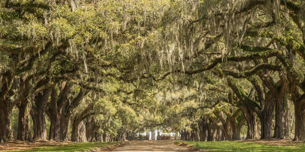 D800-Charleston Day 4-1584-2014-04-01